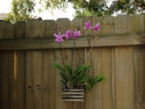 A happy orchid, I think.